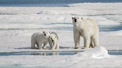 Arctique : record absolu de chaleur dans le Svalbard