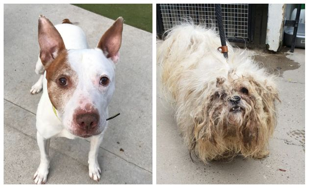 Bobby and Terry were both found abandoned during the coronavirus lockdown. The charity estimates we could...
