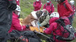 'Embarrassed' St. Bernard Rescued By Team Of 16 From England's Tallest