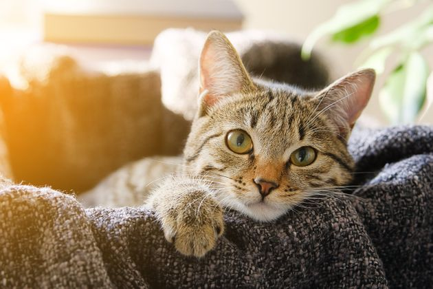 First Confirmed Coronavirus Case In A UK Pet – As Cat Contracts Virus
