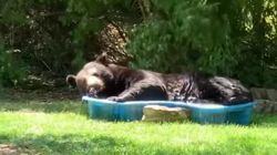 Elle découvre un ours dans sa piscine pour