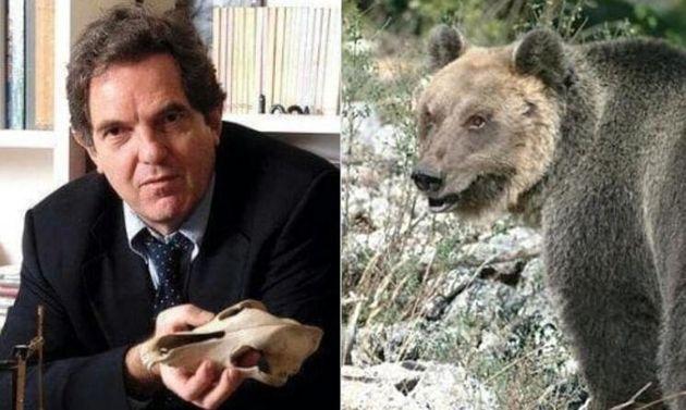 Enrico Alleva - orso
