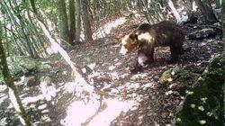 Papillon, l'orso geniale (di M.