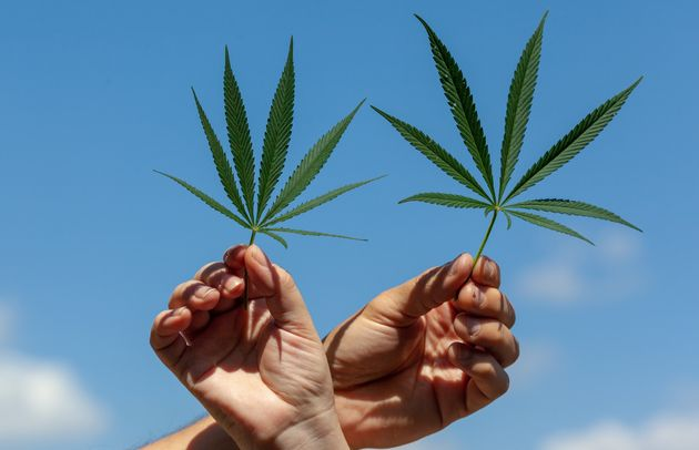 Marijuana legalization will not be part of the Democratic Party platform in