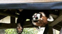 ステイホームに「ひとりじめ」動物園体験を 新型コロナ休業で新たな試み