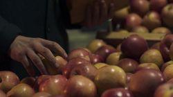 «Μήλα»: Η ταινία του Χρήστου Νίκου ανοίγει το διαγωνιστικό του Orizzonti στο 77ο Φεστιβάλ