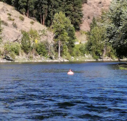 The Washington man who evaded RCMP by jumping into the Kettle River was eventually arrested.