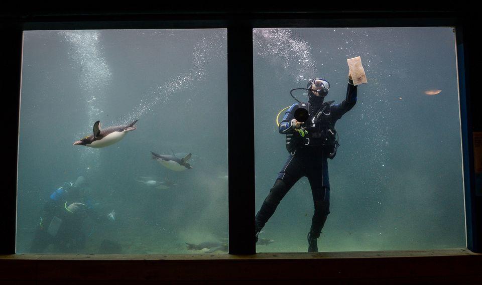Living Coasts Zoo & Aquarium in Torquay shut its doors in