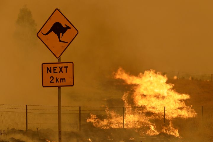 The devastating fires that surged across Australia in 2019 and 2020 scorched millions of acres of habitat and left billions o
