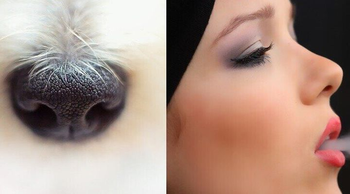 곡비원류와 같은 모양의 개 코(왼쪽)와 직비원류에서 진화해온 사람의 코