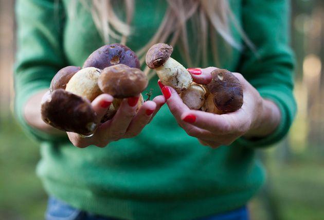 Τα δηλητηριώδη μανιτάρια στην Ελλάδα: Τα χαρακτηριστικά τους και τι πρέπει να
