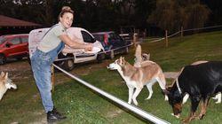 Picchiata dai malintenzionati, viene soccorsa dai cani che ha salvato dalla
