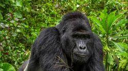 Ουγκάντα: Ποινή φυλάκισης 11 ετών στον δολοφόνο του