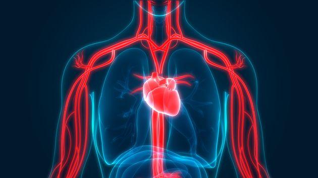 Representación del sistema circulatorio