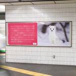 「好きな動物はオコジョです」。表参道の駅に突如現れた話題の看板広告。その意図がめちゃくちゃ深かった...