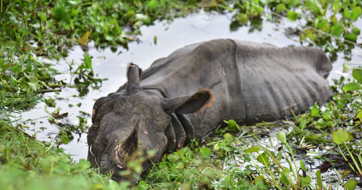 Assam Floods Has Had A Significant Impact On Humans And Its Wild Animals
