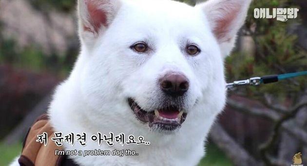 '동물농장' 유튜브 '애니멀봐'가 장애견 자막 표현 논란에