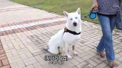 '동물농장' 유튜브가 장애견 자막 표현을