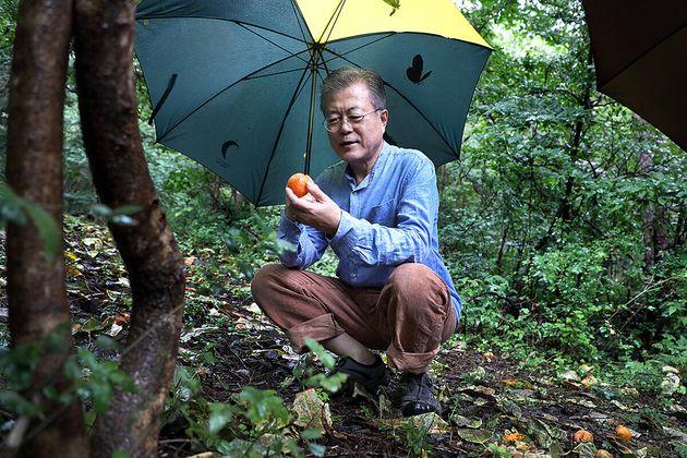 (자료사진) 2018년 9월 휴가 때 경남 양산시 사저 뒷산에서 산책을 하는 문재인 대통령의