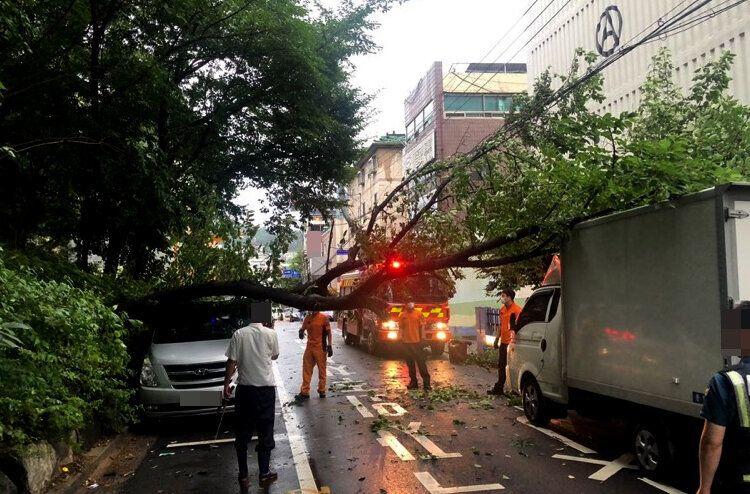 3일 오전 6시 40분쯤 경기도 부천시 고강동의 한 주택가 도로에서 나무가 쓰러져 주차된 차량 2대를 덮쳤다.소방당국이 안전조치를 하고