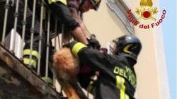 Morto il cane abbandonato per due giorni sul balcone dai