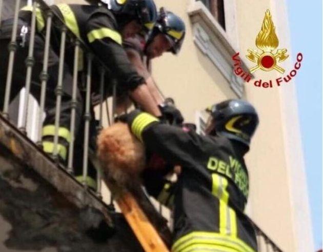 Morto il cane abbandonato per due giorni sul balcone dai proprietari