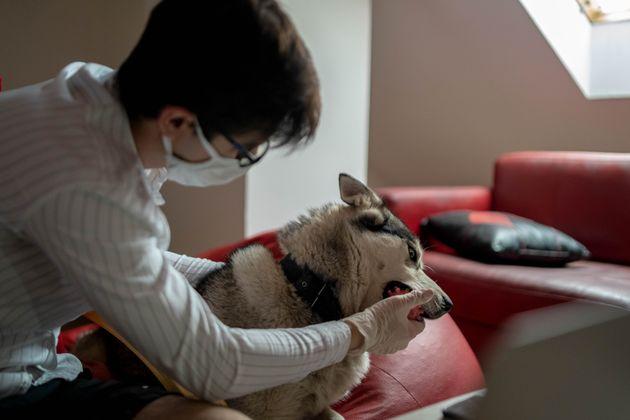 飼い主とペットのイメージ写真