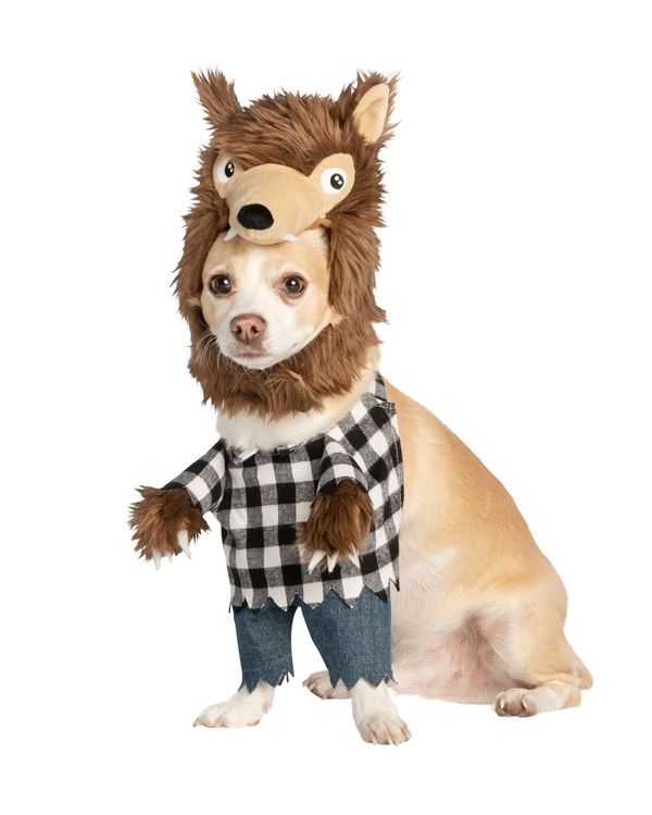 Since Halloween parties are out this year, you may have to recruit family members to join you in the fun. Your dog will love