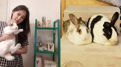 8년차 토끼 집사가 전하는 토끼에 대한 오해와 매력