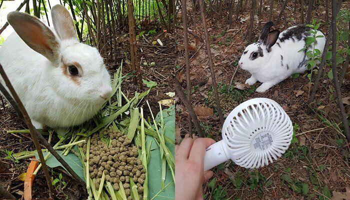 몽마르트공원의 토끼들