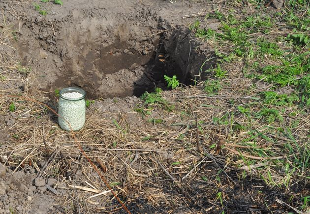 A container of ammonium nitrate fertilizer being used for planting fruit
