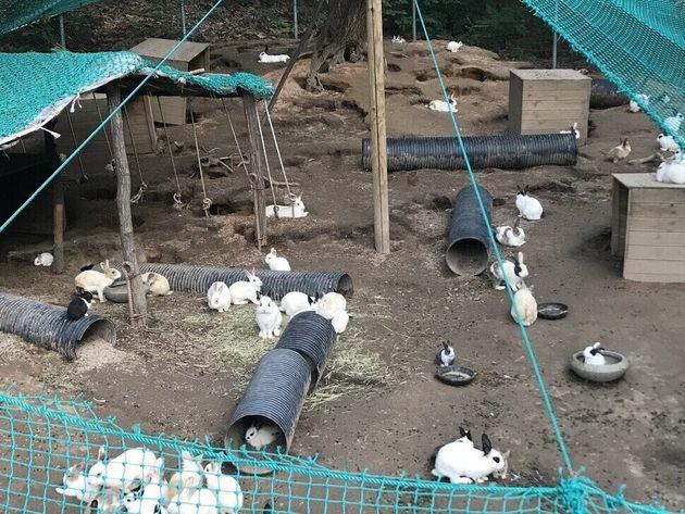 평소 배봉산 토끼사육장 모습. 토끼들이 비를 피할 수 있는 쉼터가 거의