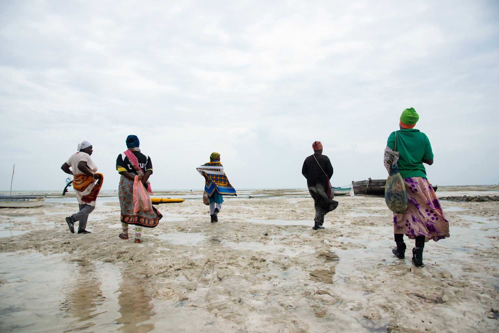 The sponge farmers walk to their farms at low tide. The women have only a few hours to work before the tide is too high.