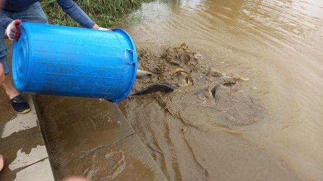 7일 오후 한강사업본부 직원들이 물고기들을 한강에 방류하고