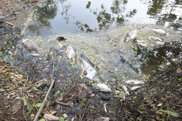 Dead fish and saline water was brought upstream by Cyclone Amphan, at Kakdwip in the Sunderbans, South...
