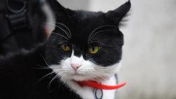 Ο Πάλμερστον, Αρχικυνηγός Ποντικών του βρετανικού ΥΠΕΞ, βγαίνει στη σύνταξη και πάει