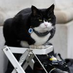 영국 외교 고양이 팔머스턴이 공식 은퇴를 선언하며 남긴