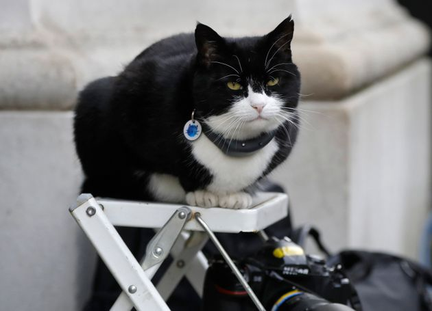 (자료사진) - 2019년 2월 12일 날짜로 기록된 이 자료사진에서 외무부 고양이 팔머스턴이 런던 다우닝 가에서 사진사의 사다리 위에 앉아 있다. 2020년 8월 7일, 팔머스턴은...