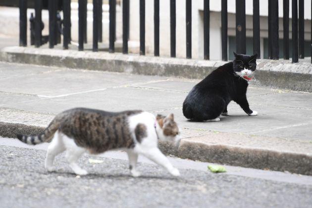 パーマストン、ダウニング街を歩く首相官邸のラリーを監視(2017年)