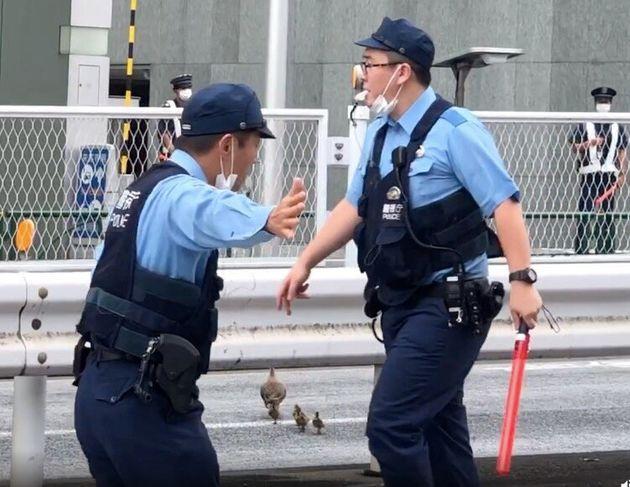 2本目の横断歩道で、カルガモ親子の横断のために交通整理をする警察官=2020年7月20日、東京都港区