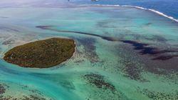 Disastro ambientale a Mauritius: 1000 tonnellate di petrolio in mare e la nave arenata che rischia di