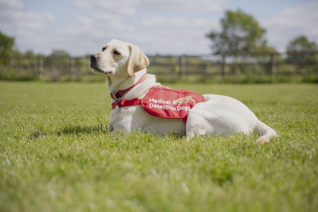 Star is one of the detection dogs being trained to sniff out Covid.