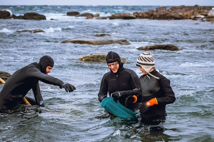 Foraging sustainably takes a lot of planning, requiring careful navigation of slippery rocks where seaweed tends to collect.