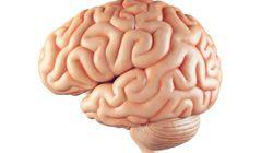 ¿Cómo evitar que el cerebro envejezca demasiado