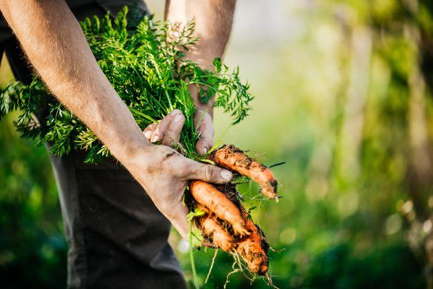 L'agriculture locale et bio est-elle vraiment meilleure pour
