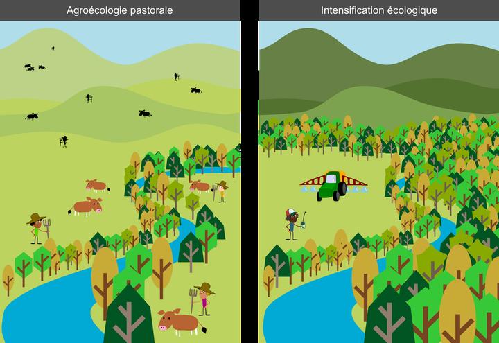 L'intensification, couplée avec un des objectifs écologiques, permet d'épargner le territoire, une stratégie qui favorise davantage la biodiversité que celle de cohabiter avec la nature sur des territoires cultivés.