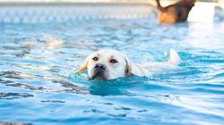 ¡Al agua perros! (vacaciones muy
