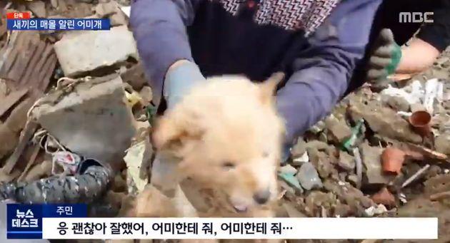 11~12일 매몰됐던 강아지 4마리가 구조될 당시의