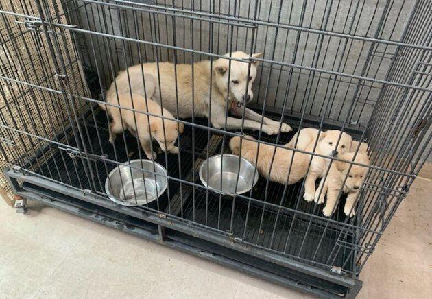 동물보호센터로 옮겨진 어미개와 강아지
