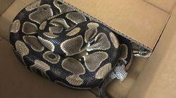 B.C. Python Found After Six-Week Wild Snake